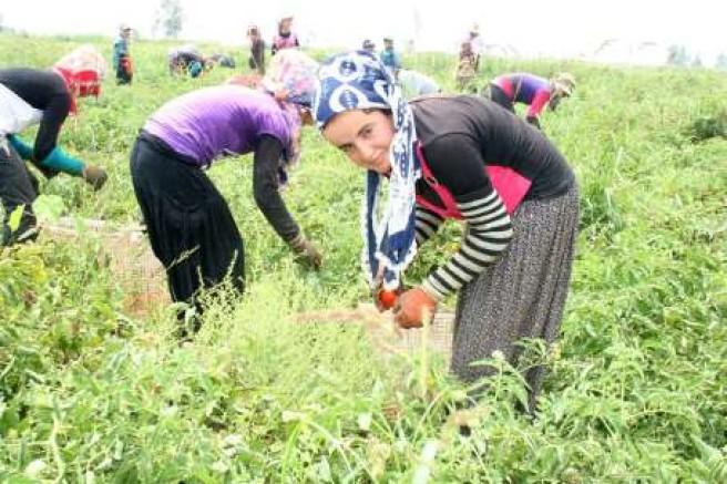 Tarımda kriz